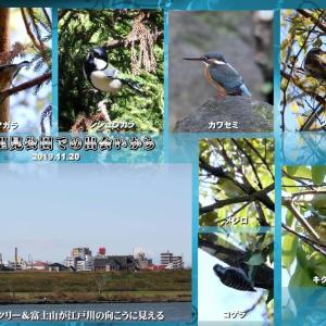 北風(木枯らし一番?)の中での鳥撮り