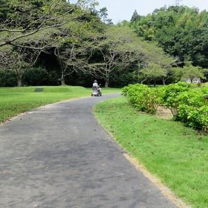 130.暑い最中のリハビリ散歩?ひまわりを見に行く。