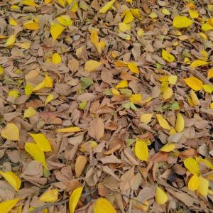 秋いっぱいの楽しみ