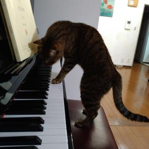 目の不自由な猫と暮らして ◆ お気軽なミニマルライフ