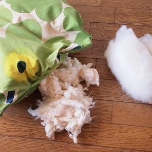 2015年前後に育てた綿が