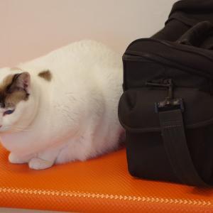 広島市の猫カフェバロンにて-(2)