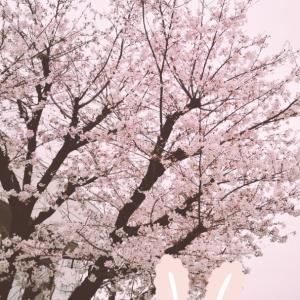 春なんよねー。。。