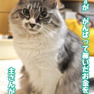 一人暮らしで猫を飼う<3年目の年間飼育費>