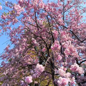 春・夏・冬を3日で感じた3月