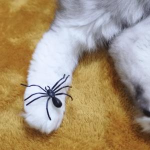 クモはおもちゃのほうがいい