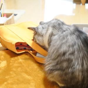 猫の嗅覚のすごさ