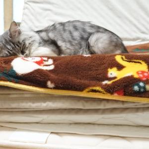 カリカリの上に寝た猫