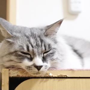 『ねこのきもち』6月号ふろく・白猫ターチャン ひんやりマシュマロクッション