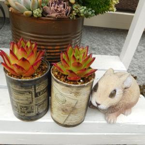 可愛いエボニーとディフューサの花
