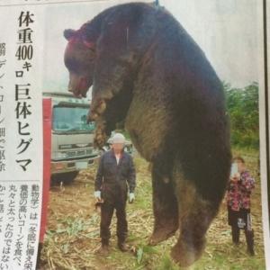 ヒグマ駆除・・ブログ投稿の反響!