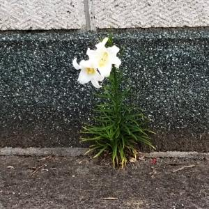 ど根性花!