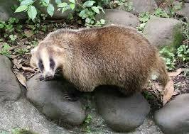 岡山でシロクマ捕獲?