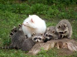 野生動物の白化?(1)