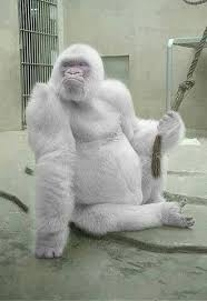 野生動物の白化?(2)