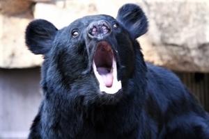 クマの人被害 過去最多!