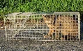野良猫を捕獲(駆除) 動物愛護法違反の疑い?