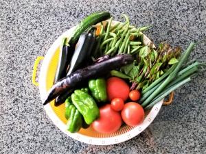老ハンター 元気の源は夏野菜!