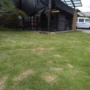 犬舎運動場周辺の芝刈り!