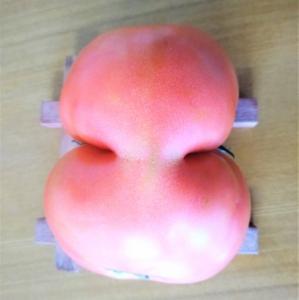 変形おもしろトマト!
