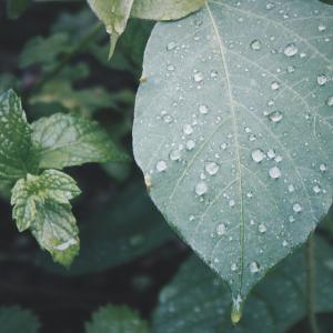 雨漏り・・・