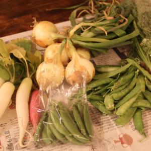 自然栽培の野菜が食糧問題を解決する