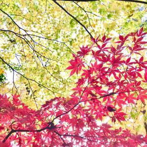 紅葉真っ盛りの軽井沢へ  #軽井沢 #紅葉