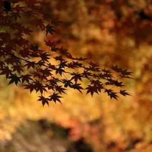軽井沢高原教会の紅葉ライトアップ  #軽井沢 #紅葉 #ライトアップ