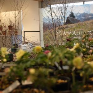 京都トルカータス 展示会まだまだ続いています