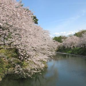 LIFE  ~弘前公園の桜~