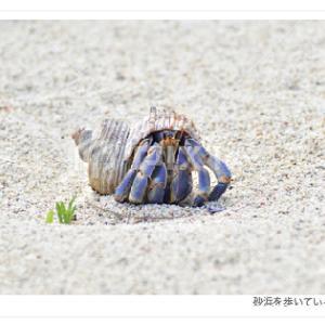 砂浜を歩いているヤドカリの写真素材/PIXTA