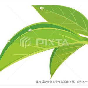 葉っぱから落ちそうな水滴(雫)のイメージイラスト/PIXTA