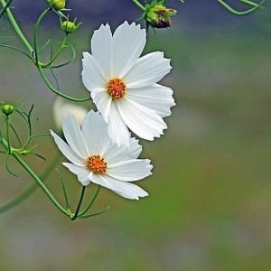 時には時の花ありて