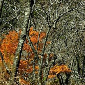 季節の色探し