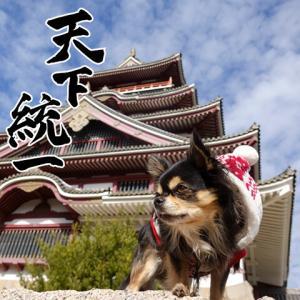 🏯伏見桃山城に行って来ました🏯