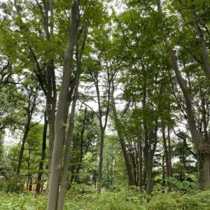 羽根木公園はすっかり秋