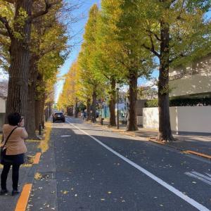 成城学園前の銀杏並木