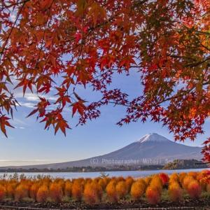 紅葉越しに富士山を楽しむ♪