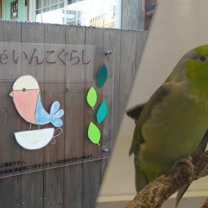 【とり好きさん同士で恋探し】いんこカフェのCaféいんこぐらしにて「とりコン」が11月24日(日)に開催!