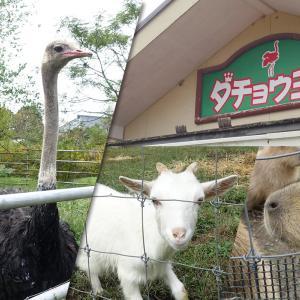 袖ケ浦市にある「ダチョウ王国・袖ヶ浦ファーム」が11月30日(月)閉園。カワイイ動物たちに会いに行ってきた。