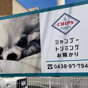 木更津市港南台にトリミングサロン「CHIPS grooming salon(チップスグルーミングサロン)」が6月18日(金)オープン!