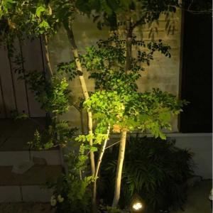 玄関の植栽をライトアップとスーパーSALE購入品。