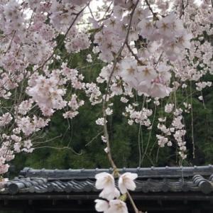 花の季節の到来!みんなの作品も花盛り!