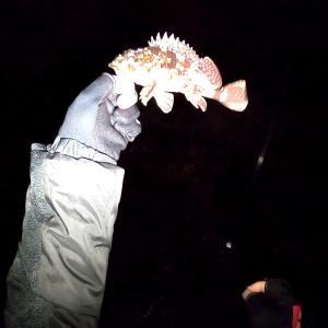 夜釣りでカサゴ釣ってヒレ酒と寿司で晩酌を愉しむ♪