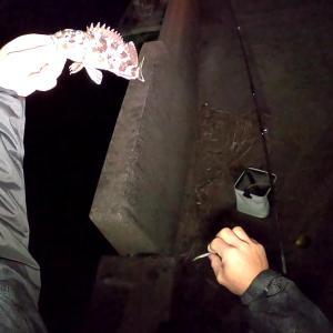 真冬の短時間でも夜のカサゴは癒しを与えてくれます♪