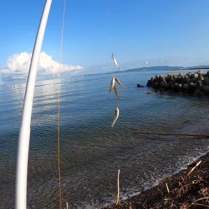 台風直前は湾内で!投げ釣りとちょい投げで楽しむキス釣り!