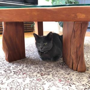 猫のいる暮らし~猫がいても清潔ですっきりした空間に~