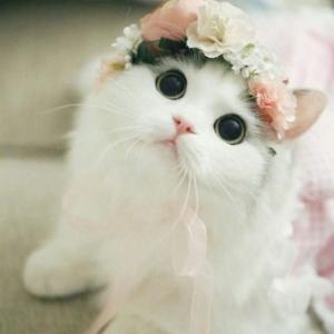 【動物画像】どの子も可愛い♡