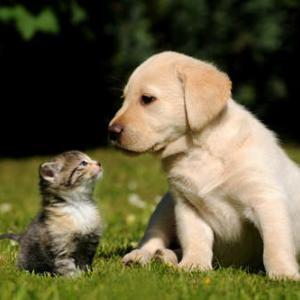 【なかよし】こってるところはニャいですか?肩を痛めたワンコをいたわる猫ちゃん♡2匹の関係がとってもすてき