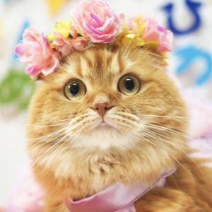 【ねこ好き】大好きだから中まで知りたい 動物の内部構造を学べる立体パズルシリーズに猫モデルが登場!